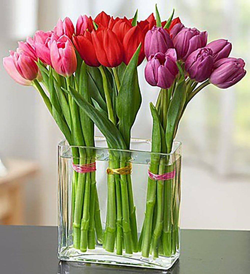 Tulip Garden Kansas City Florist Flower Delivery Kansas City