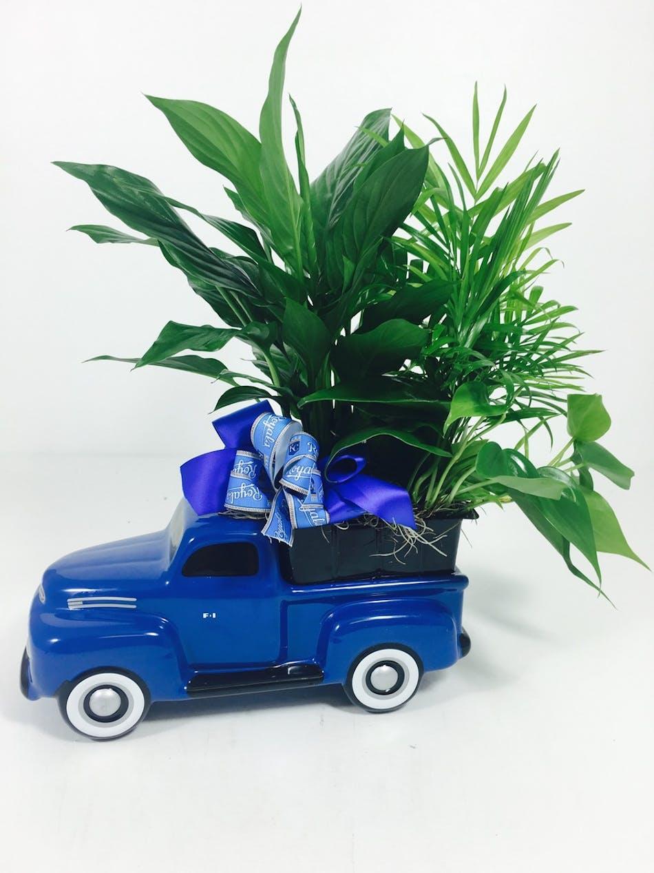 48 39 Ford Dish Garden Kansas City Florist Flower Delivery Kansas City