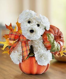 Dog-able for Fall