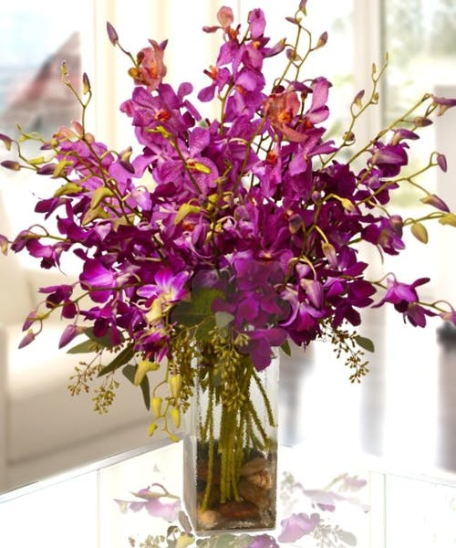 Exotic Purple Orchids
