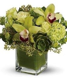Orchid Botanica