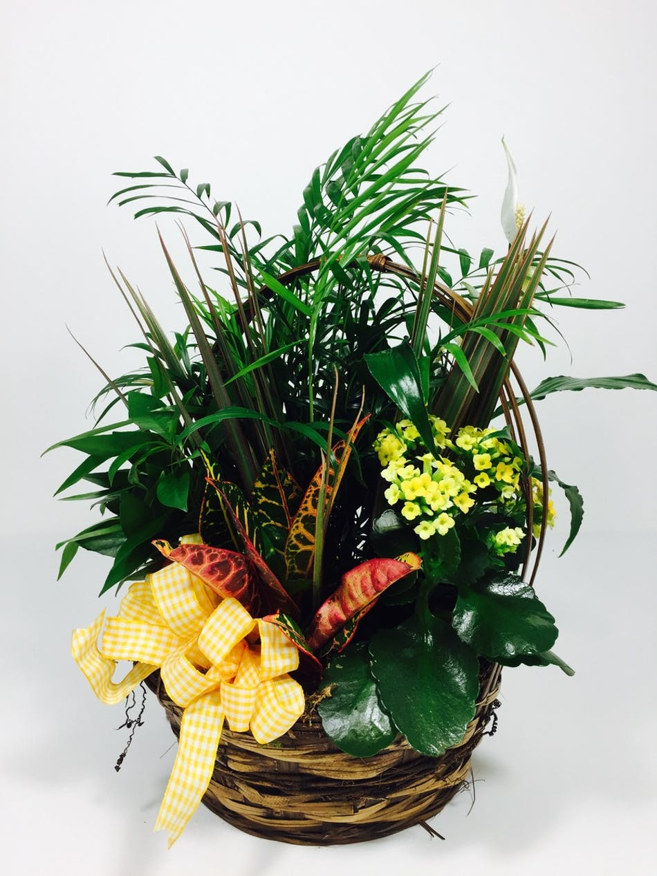 Dish Garden With Blooming Plant With A Blooming Plant Kansas City Florist Flower Delivery