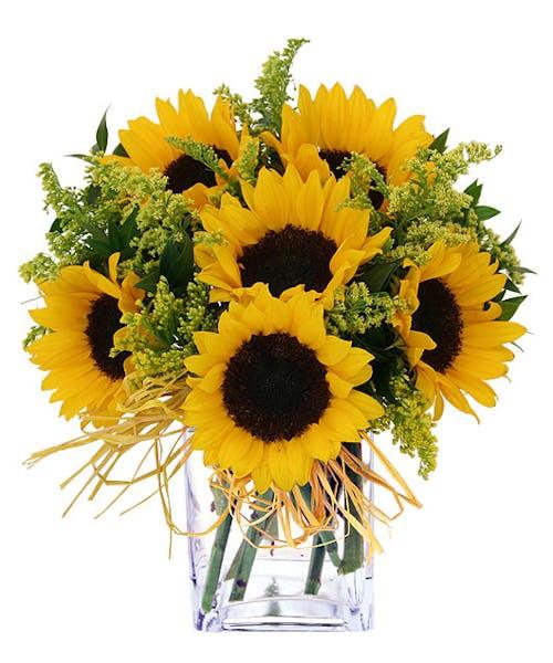 Endless Sunflowers
