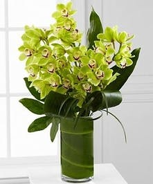 Exotic Cymbidium