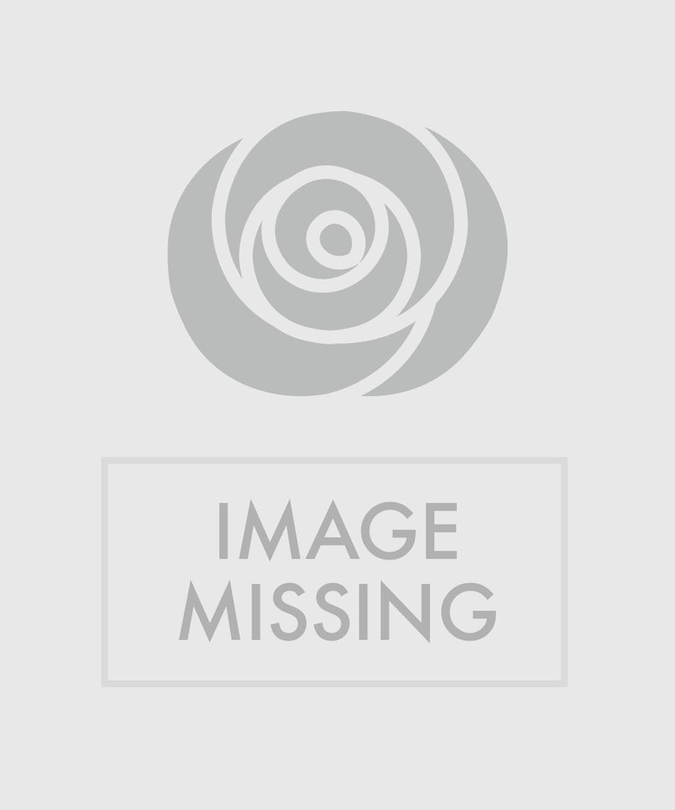 Dozen White Roses Beautiful Hand Picked Ecuadorian White Roses