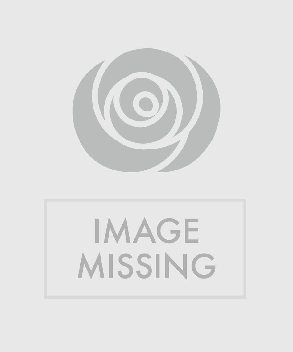 Dozen white roses beautiful hand picked ecuadorian white roses dozen white roses beautiful hand picked ecuadorian white roses kansas city florist flower delivery kansas city izmirmasajfo