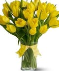 Vibrant Yellow Tulips