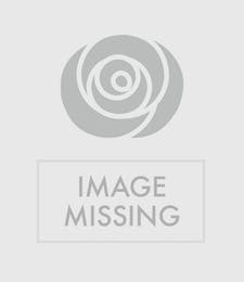 Red Roses - Dozen (12), 18, or 24