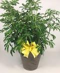 Arbicola Plant Upgraded